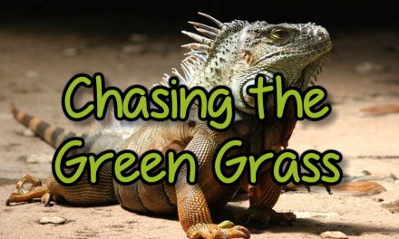 Chasing The Green Grass