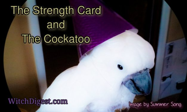 The Strength Card and The Cockatoo